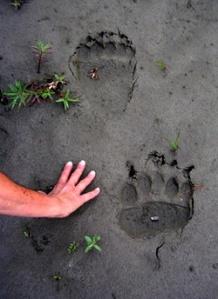 bear tracks 2