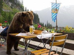 Bears gone wild!