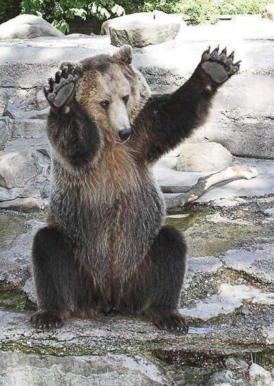 bear with both paws up
