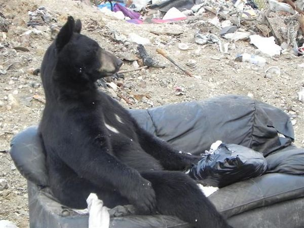 bear_on_a_comfy_couch