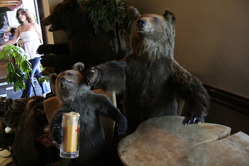 Bears Drinking Beer