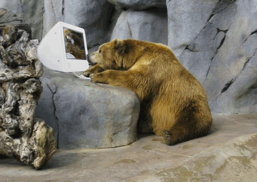 Image result for bear at computer