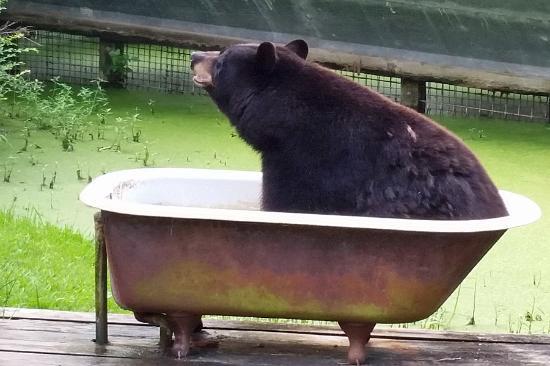 bear-in-a-bath