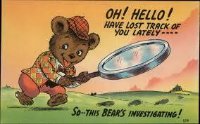 investigating bear