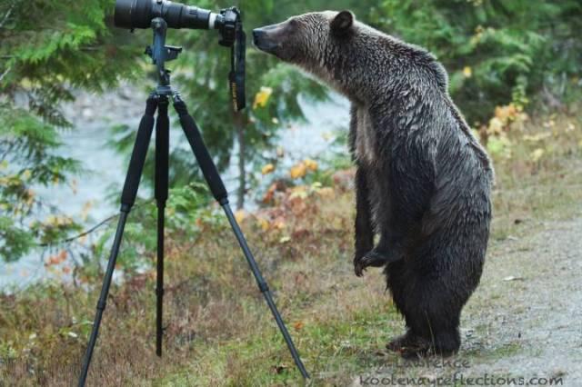 Bear Photographer